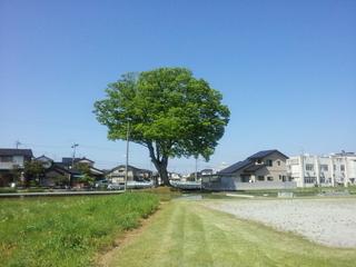 2013-05-12 09.19.40keyaki.jpg